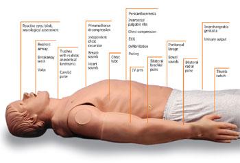 Imagem ilustrativa do artigo METI - Simulador de paciente humano