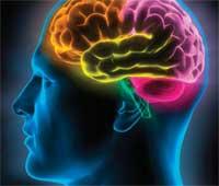 Cuidar do Cérebro, Optimizar o seu Desempenho